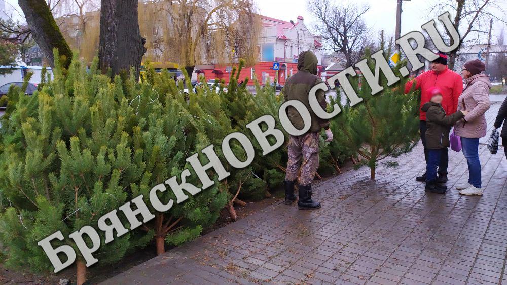 В Новозыбкове открываются елочные базары